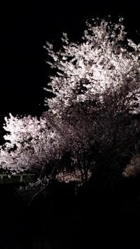 Kanazawa_09_night