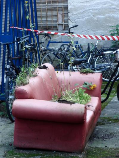 SofaPflanzen